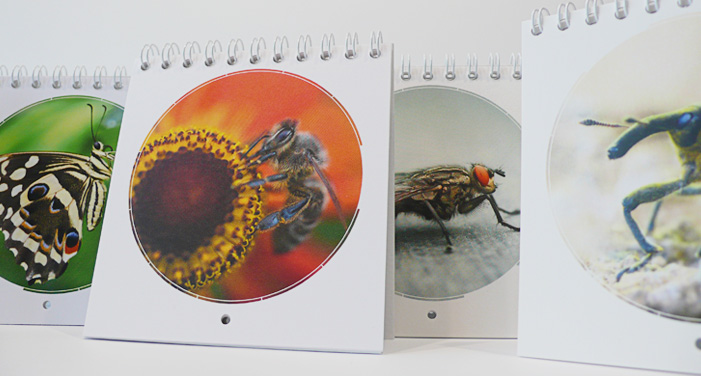 p-67-kalender2012-divers