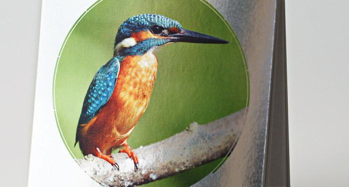 p-67-kalender2013-eisvogel