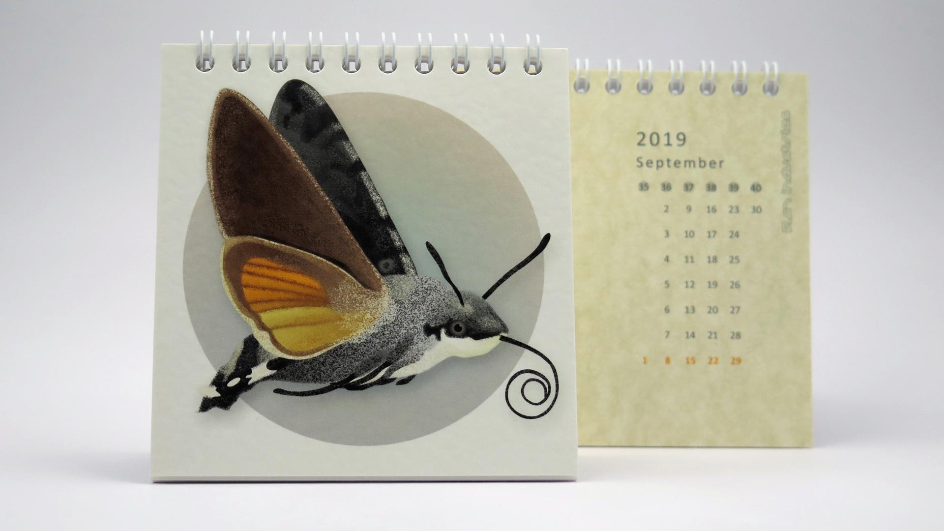 p-67-schmetterlinge-kalender-2019-1
